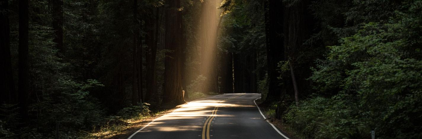 sunlight through trees on road
